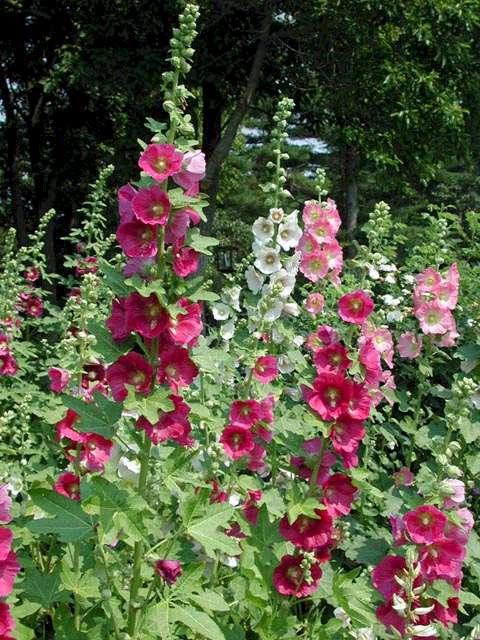 http://www.gardenmakers.com/images/No12C.jpg